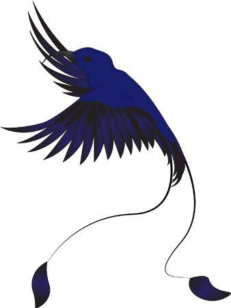 birds of paradise: Hummingbird, vector  isolated