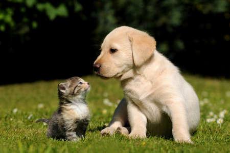 chiot et chaton: Chien et chat