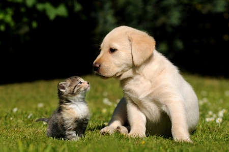 puppy and kitten: Dog and cat