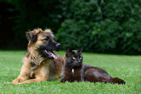 Dog and cat lying on meadow photo