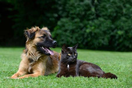 meadow  grass: Perro y gato tumbado en el prado