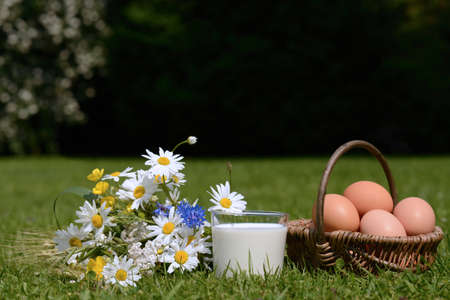 Milk and eggs on meadow photo