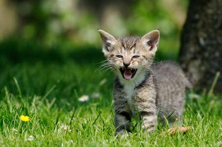 hiss: kitten standing in the garden