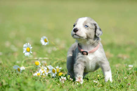 half breed: Young half breed dog on the meadow