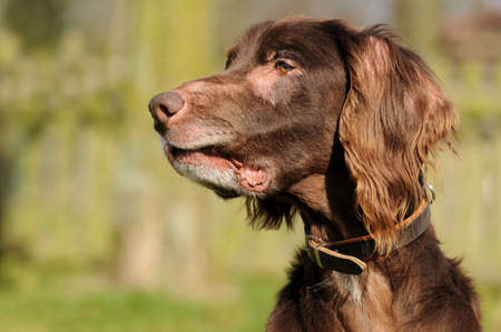 brown dog looking to the side