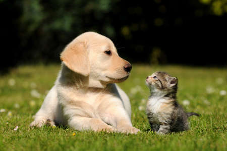 dog cat: Dog and cat