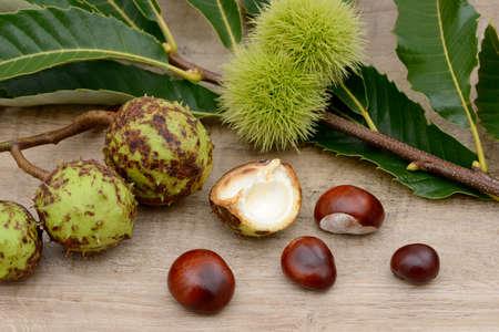 buckeye seed: Chestnuts lying on wood