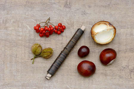 craft material tinker: tinker with autumn fruits