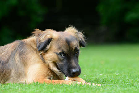 masticate: Dog eat bone Stock Photo