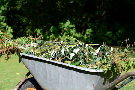 wheelbarrow with garden waste photo