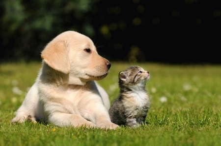 meadow  grass: Gato y perro Foto de archivo