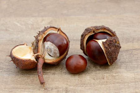 buckeye seed: chestnuts lying on wood Stock Photo