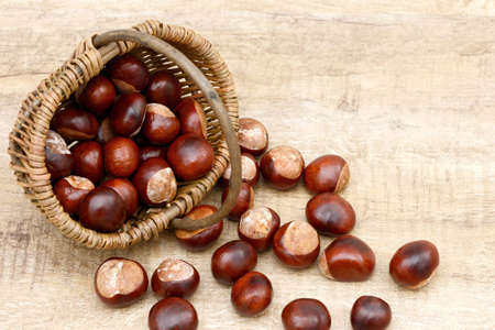 buckeye seed: chestnuts in the basket on wood Stock Photo