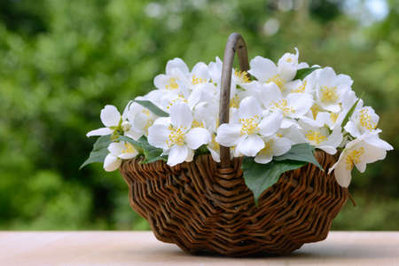 coronarius: flower basket standing on table in the garden Stock Photo