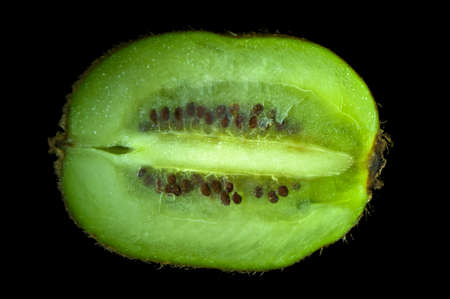 Organic kiwi fruit cut in half and freshly picked. Stock Photo