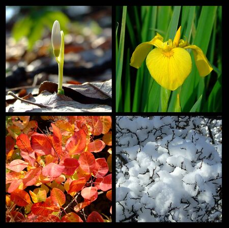 four season Stock Photo - 6998993
