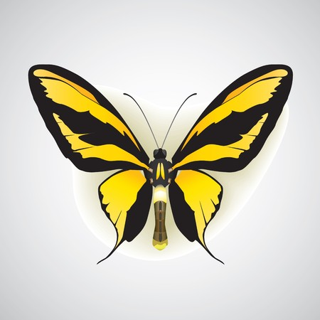 motley: exotic butterfly on with drop shadow and soft background  Illustration