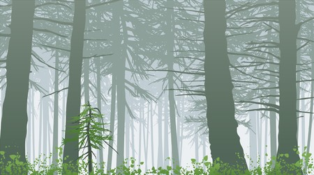 houtsoorten: Misty regenwoud met helder groene voorgrond.