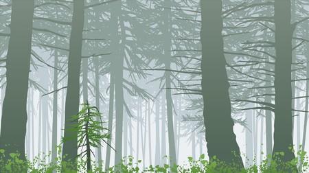 cedro: Selva brumoso con fondo de color verde brillante.