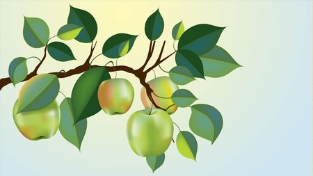 beautiful granny smith apple branch ready for harvest, gradient mesh used Stock Vector - 7819313