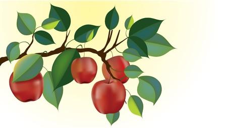 branche de pomme rouge délicieuse prête pour la récolte. filet de dégradé utilisé tout au long