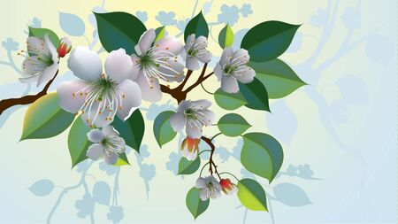 A branch with apple blossoms  Иллюстрация