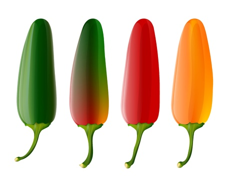 Set of 4 jalapeno peppers Stock Vector - 12987604