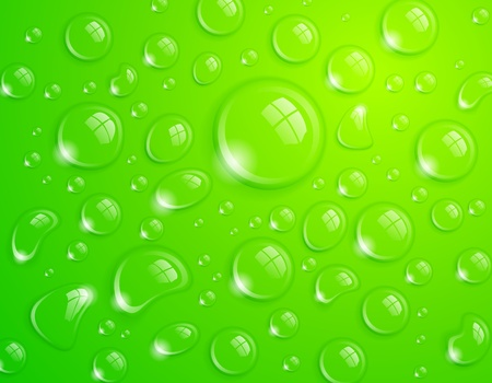 dewdrops: Clean water drop background on green surface