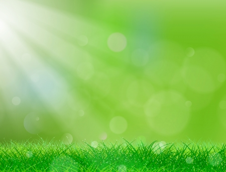 Beautiful green background with lots of copy space   Stock Vector - 14113771