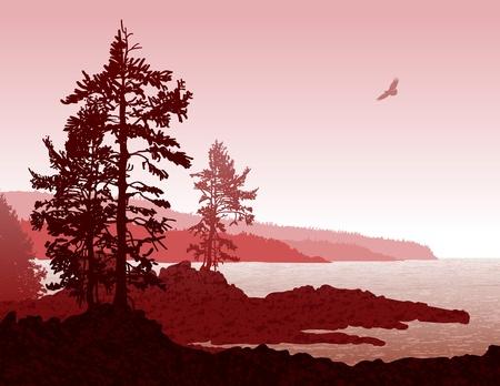 coniferous forest: Ilustraci�n inspiradora de la escarpada costa oeste de la Isla de Vancouver Vectores