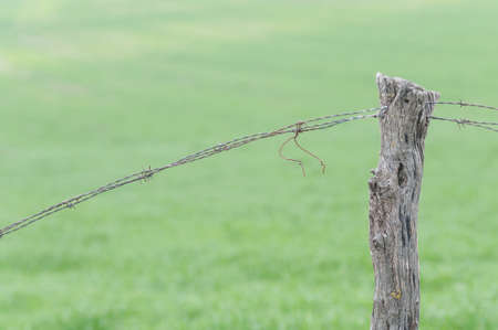 cattle wires: Limitation of boundaries with barbed wire and wooden posts