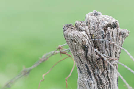cattle wire wires: Limitation of boundaries with barbed wire and wooden posts