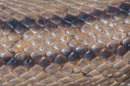snake and ladder: Scaly skin texture snake ladder