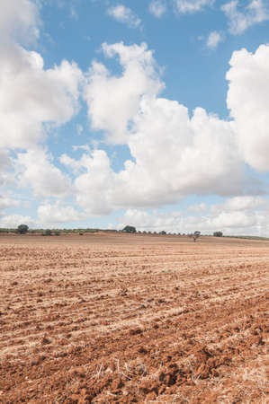 cropland: Tilled cropland to be harvested