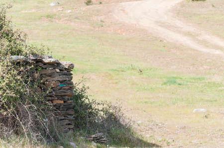 extremadura: Dog in Extremadura landscape and marsh Stock Photo