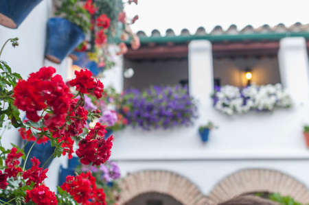 Flowers Cordoba Andalusia Spain yards