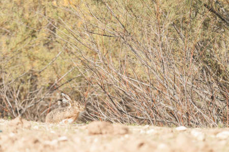 breeding ground: hare breeding ground bottom scrub