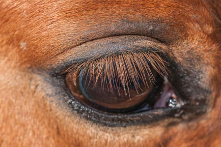 caballo negro: Caballos y ponis pastando en libertad raza espa�ola Foto de archivo