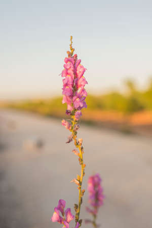 blosom: wild flowering plants of different colors isolated