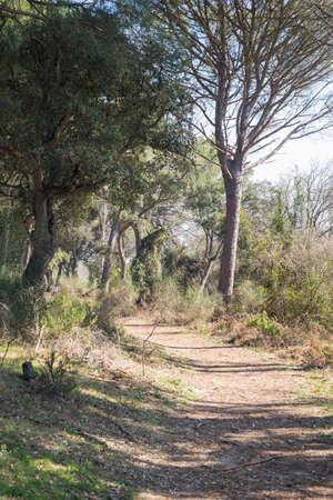 Details of Doñana park Huelva Andalucia Spain Stock Photo