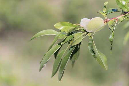 Wild flora in the Axarquia Malaga Spain