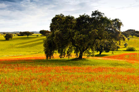 greenfield: Typical landscape of Alentejo in the beginning of spring. Portugal.