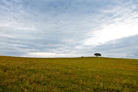 greenfield: Sunrise on the plains of Alentejo. Early spring.