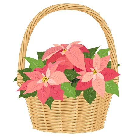 gift basket: Pink poinsettias in basket, isolated on white background Illustration