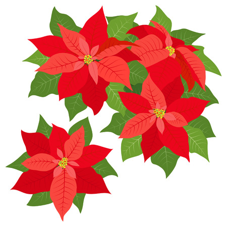 poinsettia: Red poinsettias decorations isolated on white