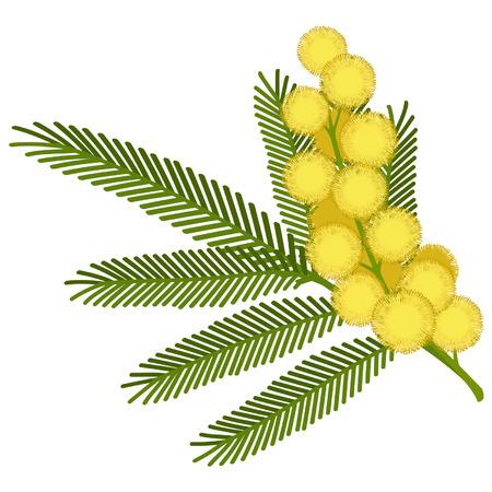 a sprig: Ramita de flor de mimosa