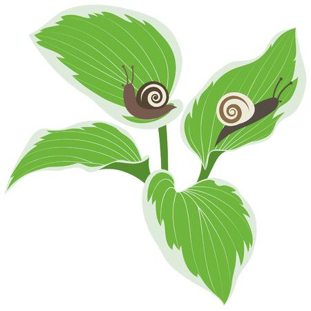 gastropod: Snails on leaves