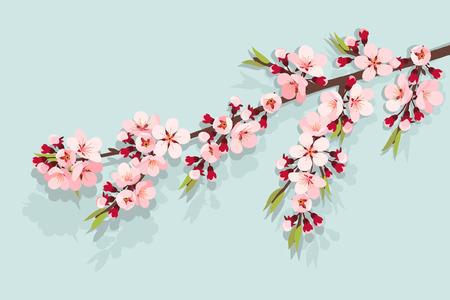 peach blossom: Pink cherry blossom on sky blue background