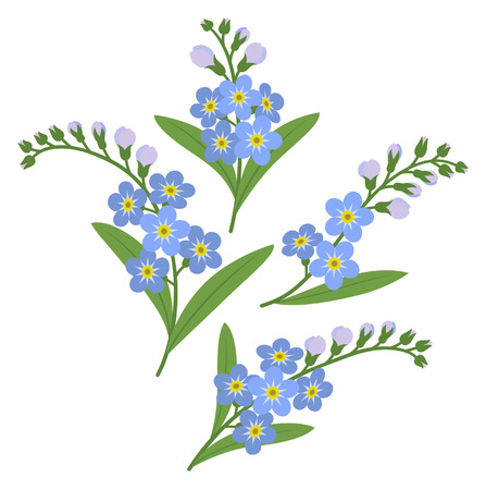 Sprigs of myosotis flowers isolated on white background Vector
