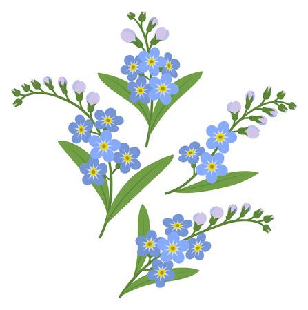 Sprigs of myosotis flowers isolated on white background
